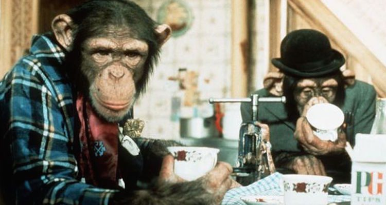 the tipps enjoy a nice cup of pg tips from the popular ads